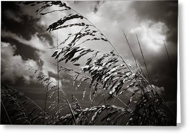 Sea Oats Greeting Cards - Seaside Greeting Card by Jessica Brawley