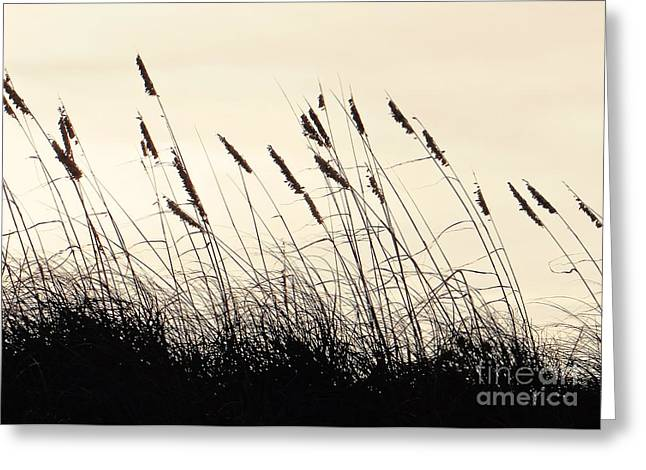 Seaside Oats Greeting Card by Joy Hardee