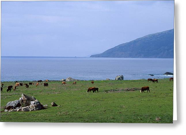 Seaside Pasture Greeting Card by Soli Deo Gloria Wilderness And Wildlife Photography