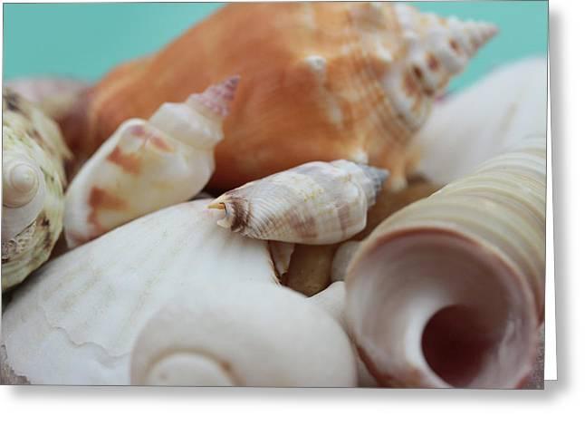 Seaside Seashells Greeting Card