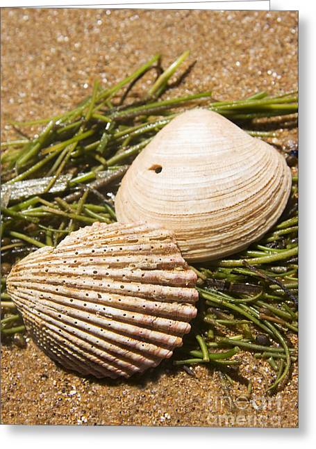 Seaside Seashells Greeting Card by Jorgo Photography - Wall Art Gallery