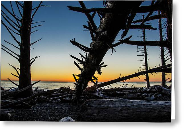 Seaside Tree Branch Sunset 3 Greeting Card by Pelo Blanco Photo