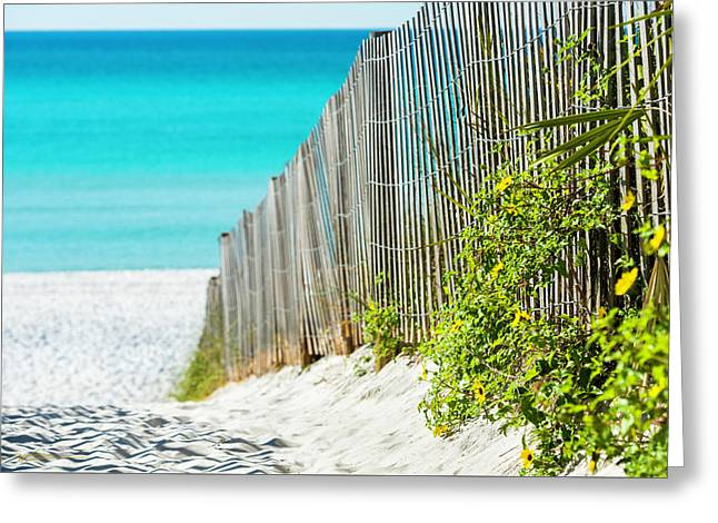 Seaside Wildflower Sand Fence Greeting Card