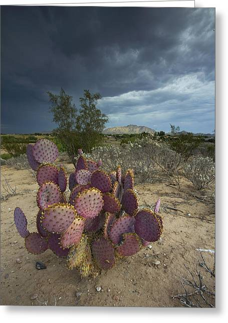 Season Of The Storm Greeting Card by Sue Cullumber