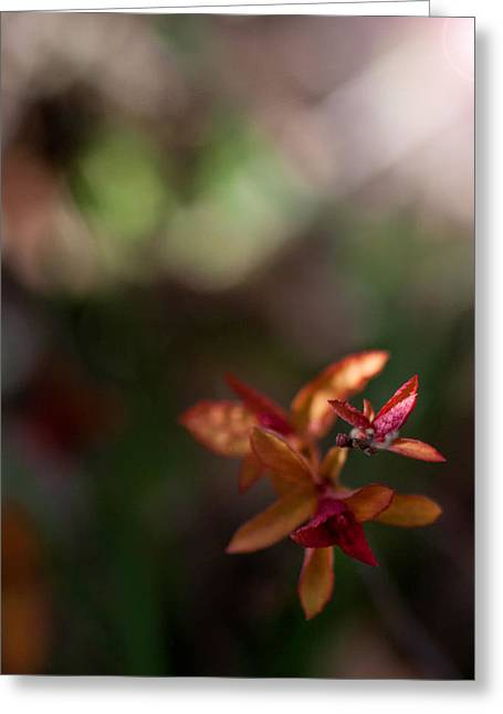 Greeting Card featuring the photograph Seasons Beginning by Cherie Duran