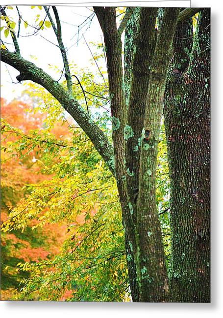 Seasons Greeting Card by Trudi Southerland