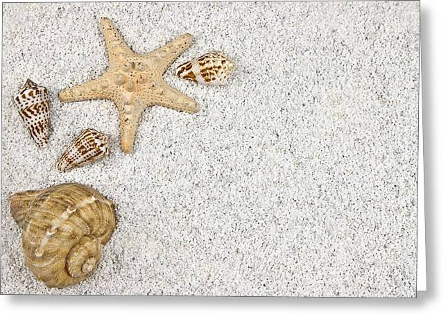 Beach White Greeting Cards - Seastar And Shells Greeting Card by Joana Kruse
