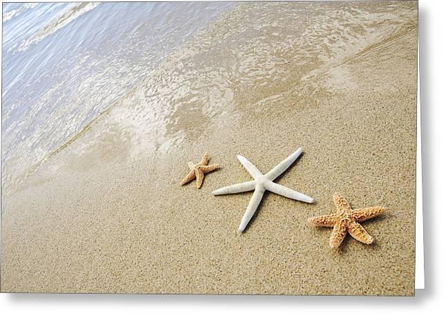 Seastars On Beach Greeting Card