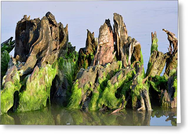 Seaweed-covered Beach Stump Greeting Card by Bruce Gourley