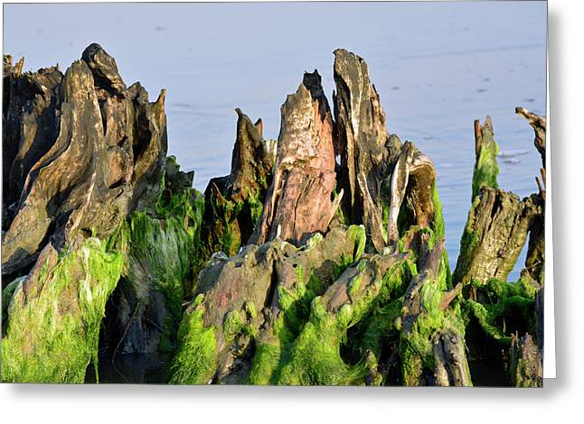 Seaweed-covered Beach Stump Mountain Range Greeting Card by Bruce Gourley