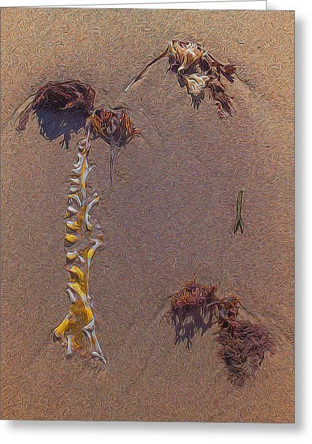 Seaweed On Clayhead Beach Greeting Card