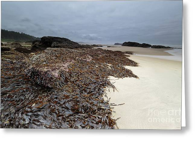 Seaweed On The Beach Greeting Card
