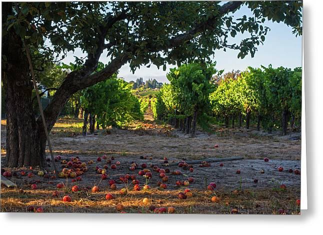 Sebastopol Tree And Vineyard Sebastopol Ca Greeting Card