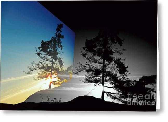 Sechelt Tree Greeting Card
