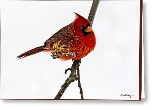Second Cardinal Greeting Card