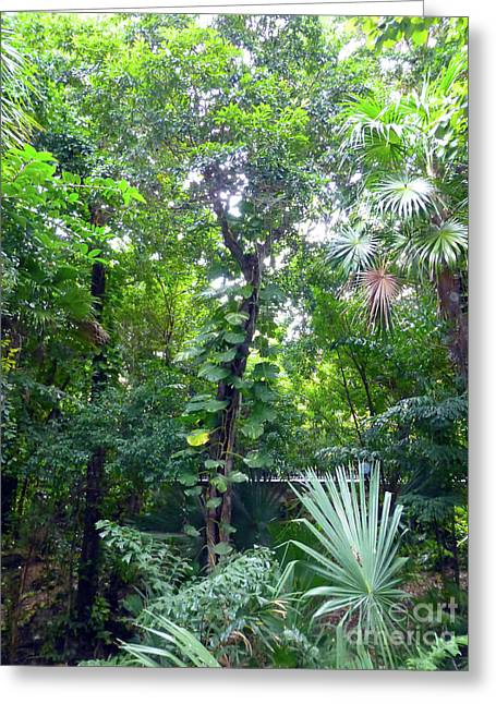 Greeting Card featuring the photograph Secret Bridge In The Tropical Garden by Francesca Mackenney