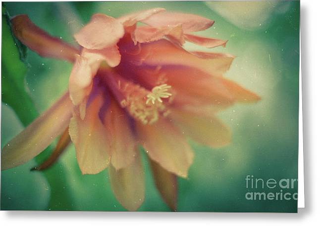 Greeting Card featuring the photograph Secret Garden by Ana V Ramirez