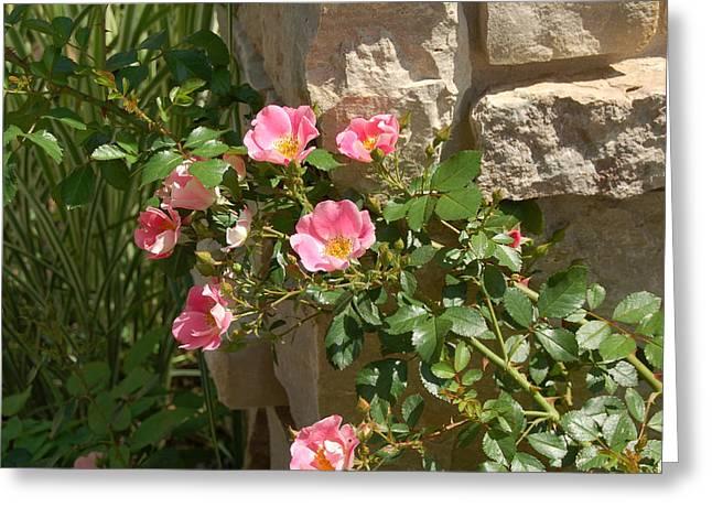 Secret Garden Greeting Card by Lisa Patti Konkol