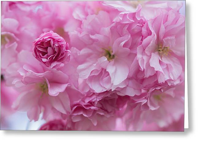 Secret Life Of Flowers Greeting Card