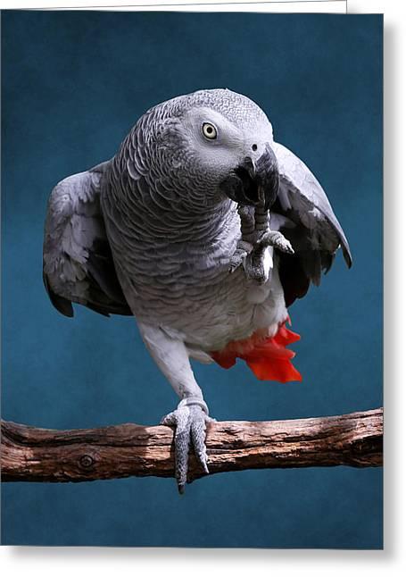 Secretive Gray Parrot Greeting Card