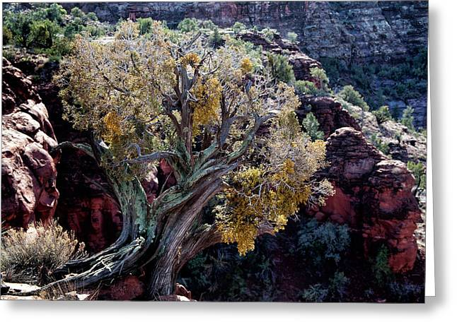 Sedona Tree #2 Greeting Card