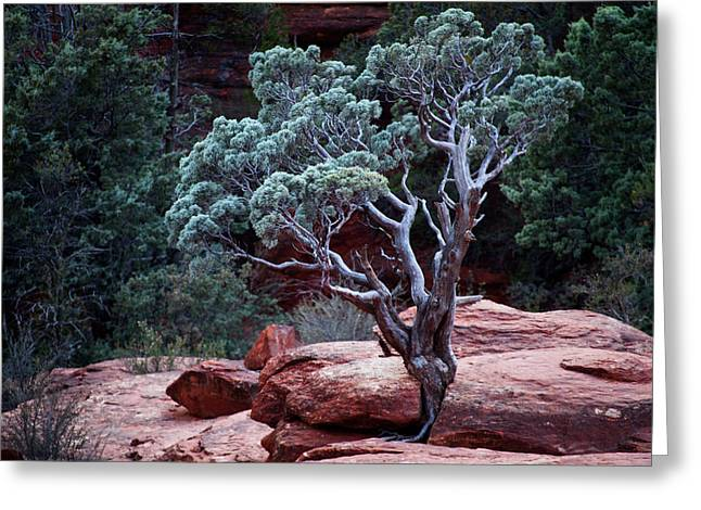 Sedona Tree #3 Greeting Card
