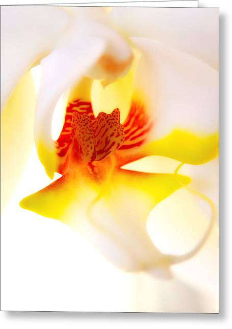 Greeting Card featuring the photograph Seductive Is The Orchid by Michael Hope