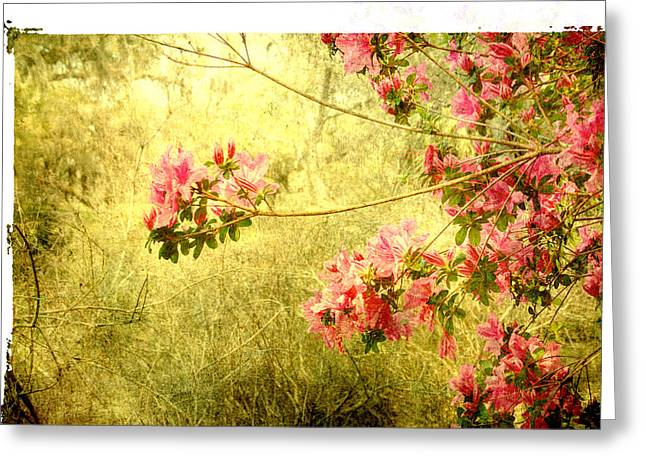 See You Next Spring Again Greeting Card by Susanne Van Hulst