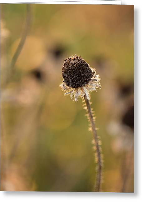 Seed Head Greeting Card by Andrea Kappler