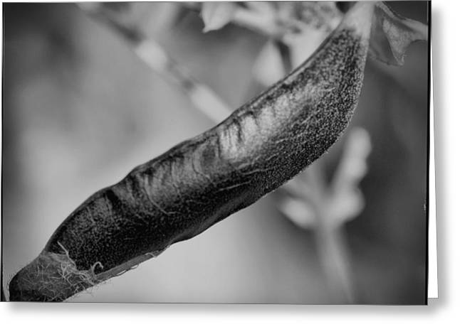 Seed Pod Greeting Card by Keith Elliott