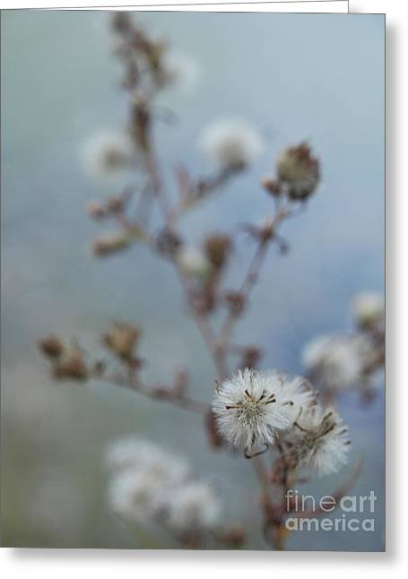 Seed Pods By The Lake Greeting Card