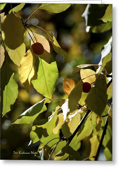Seed Pods In The Fall Greeting Card