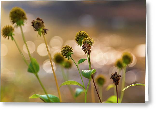 Greeting Card featuring the photograph Seedheads by Mark Mille