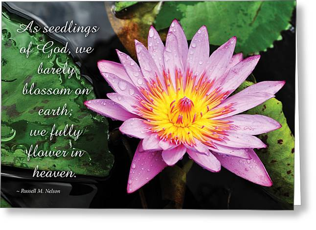 Seedlings Of God Greeting Card