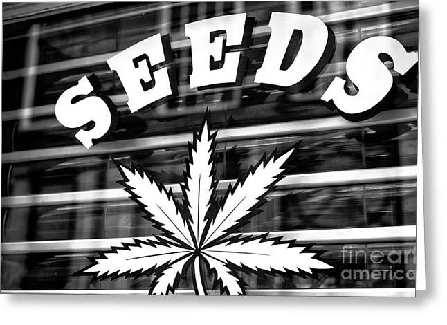Seeds Mono Greeting Card by John Rizzuto