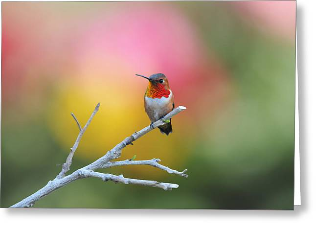 Seeing Red Greeting Card by Lynn Bauer