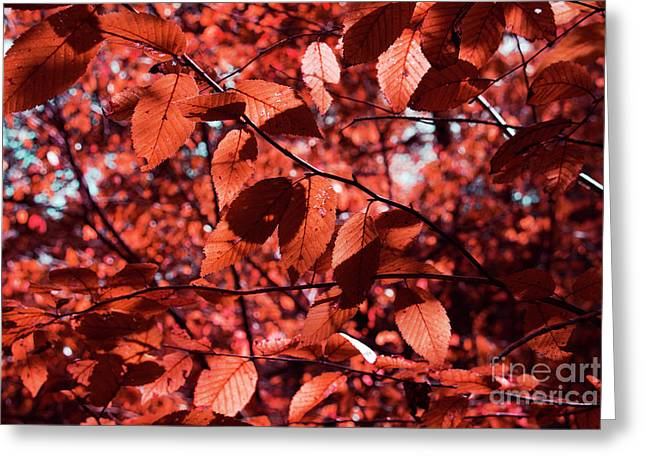 Seeing Red Greeting Card