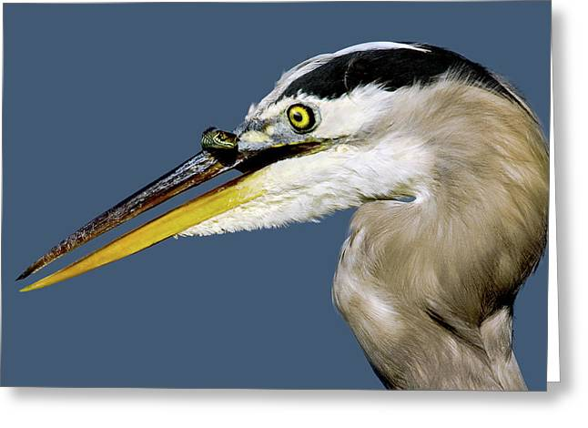 Seeing Your Captor Eye To Eye Greeting Card