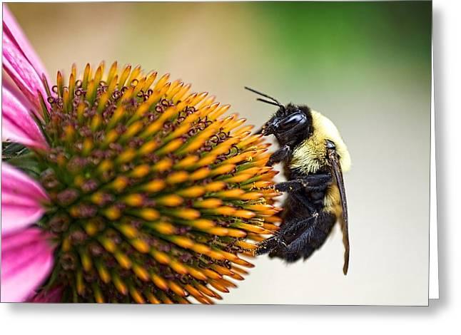 Seeking Nectar Greeting Card
