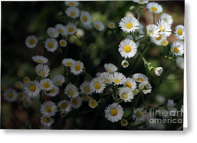 Seeking Sun Greeting Card by Jeannie Burleson