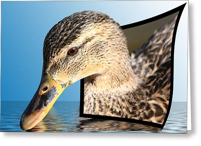 Photos Of Birds Mixed Media Greeting Cards - Seeking Water Greeting Card by Shane Bechler