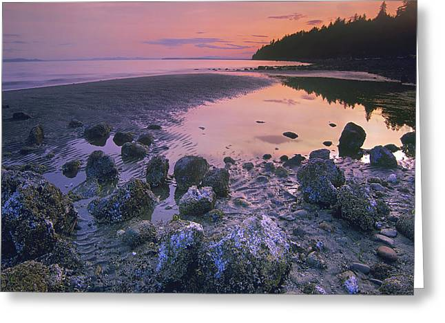 Semiahmoo Bay Greeting Card