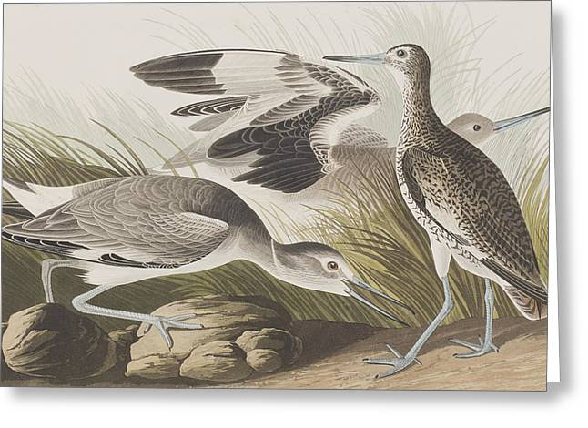 Semipalmated Snipe Or Willet Greeting Card by John James Audubon
