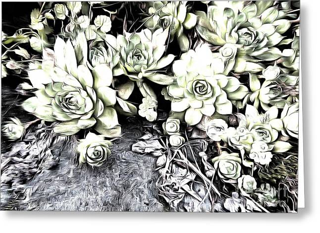 Greeting Card featuring the photograph Sempervivum - Ebony And Ivory  by Janine Riley