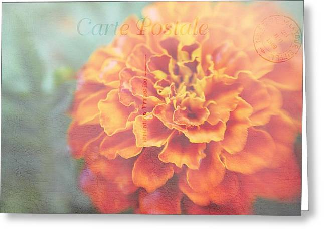 Greeting Card featuring the photograph Send With Love by Diane Alexander