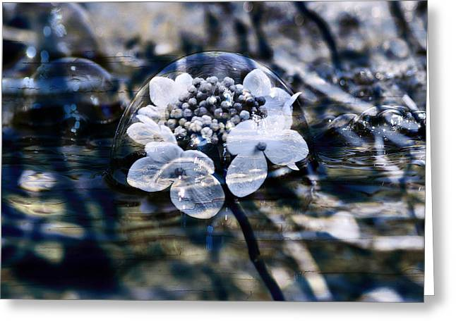 Send You Some Feeling Of Blue Greeting Card by Nicole Frischlich