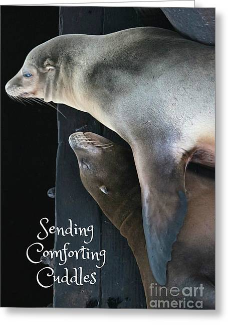 Sending Comforting Cuddles Greeting Card