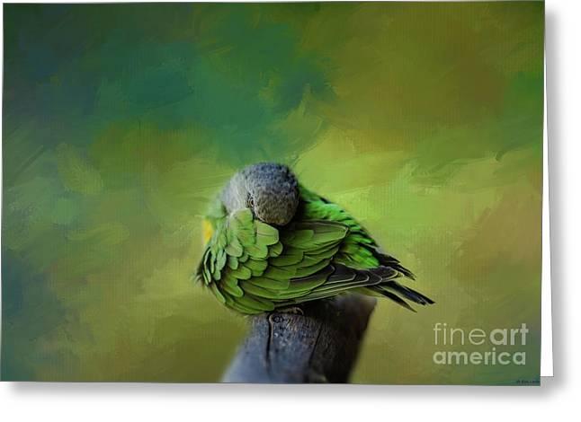 Senegal Parrot Greeting Card