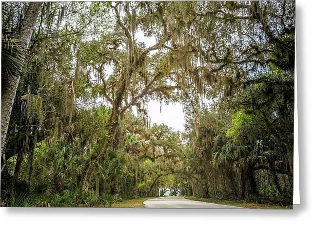 Senic Drive Under Hanging Moss Canopy Greeting Card by John Tillard