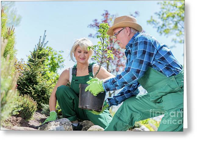 Senior Gardener And His Assistant Planting A Tree. Greeting Card